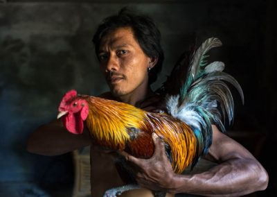 Balinese Cock-Fighters