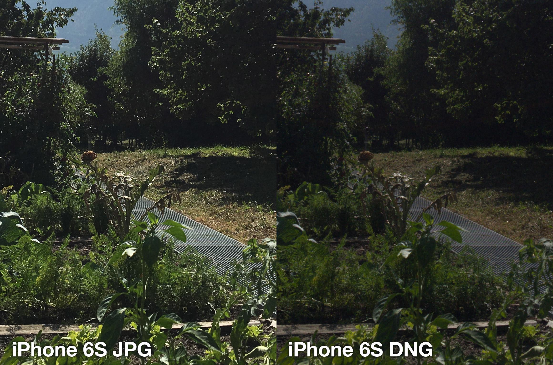 iphone-6s-lightroom-jpg-vs-dng-6